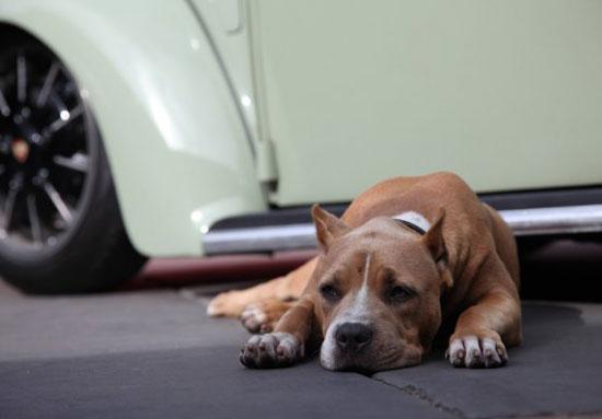 Jesse James' Missing Dog