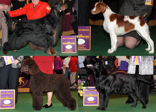 2010 Sporting Group Winners at Westminster