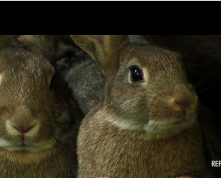 Bunnies Talk Plan B in Commercial