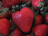 Strawberry-Infused Tequila Recipe 2010-05-28 15:30:54