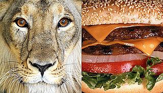 Mesa, AZ, Restaurant Il Vinaio Serves Controversial Lion Meat Hamburger For World Cup