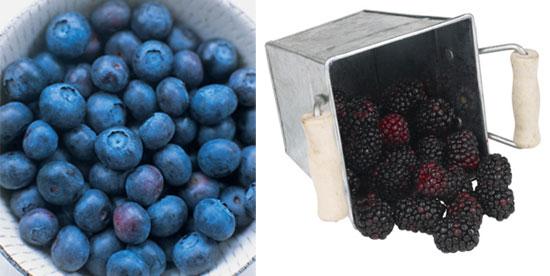 Do You Prefer Blueberries or Blackberries?