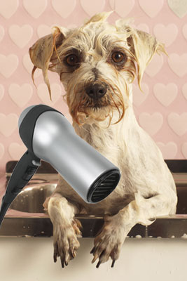 Andis Pet Dryers
