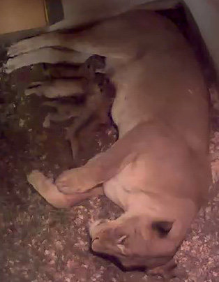 Webcam at the National Zoo in DC