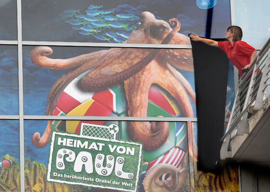 Pictures of Paul the Octopus Predicting Soccer Results