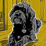 ToonPaint Drawing App For iPhone and Android