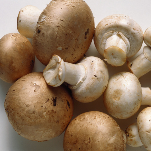 Important Nutrients in Mushrooms