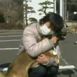 Video of Dog Being Reunited With Owners After Japan Tsunami