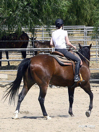 Horseback Riding Lessons pics of Kristen Stewart July 13th