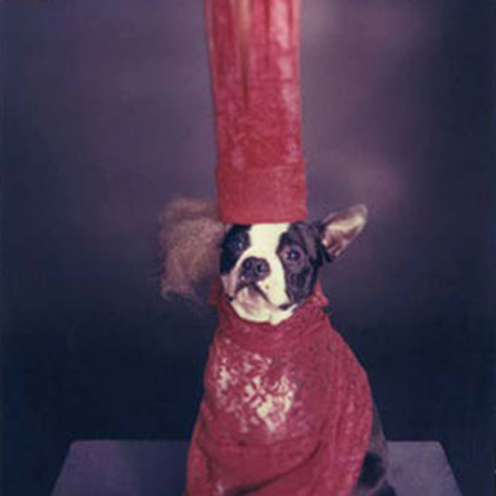 Jesse Freidin Halloween Costume Tips For Dogs