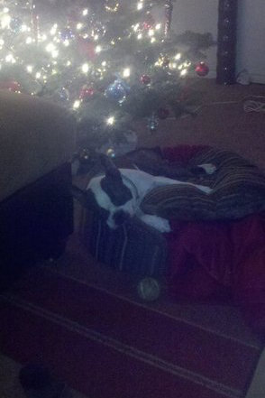 Pet Pic of the Day: Holidaze