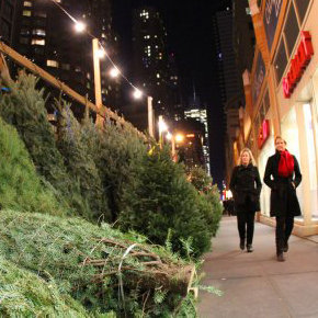 Christmas Tree Recycling Tips
