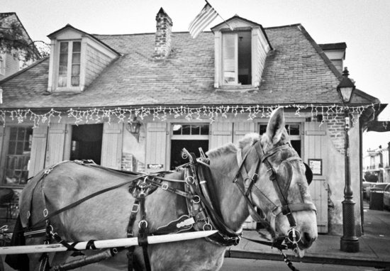 Mule at Lafitte's Bar