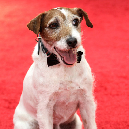 Photos of Animals on the Red Carpet