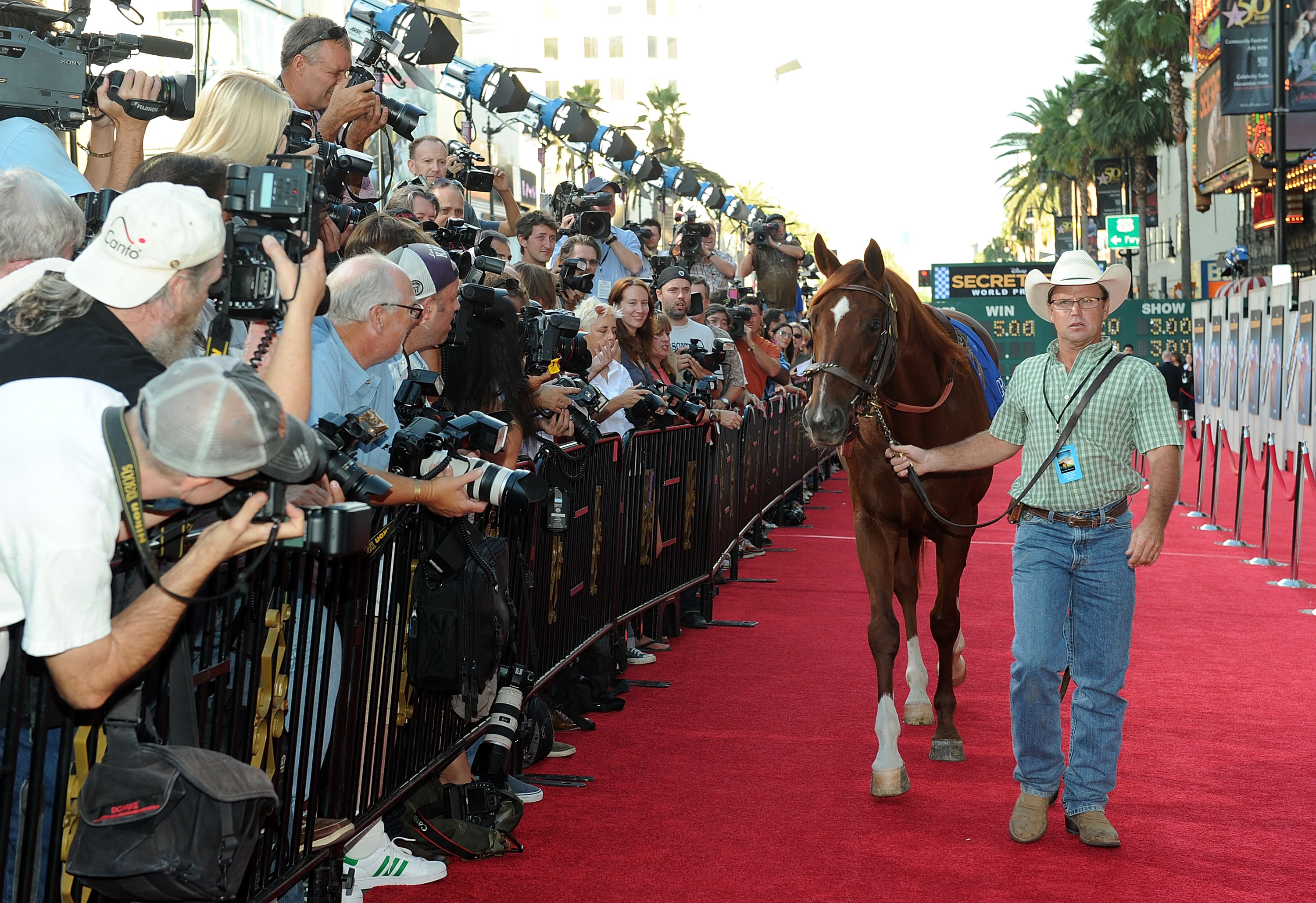 One of three horses who played Secretariat in the 2010 film arrives at the premiere to a rapt crowd.
