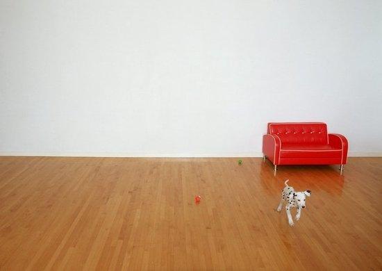 mi galeria