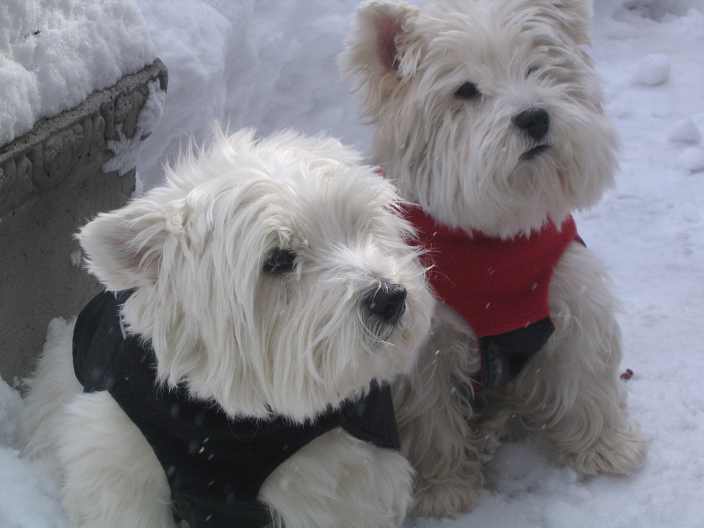 You mean we put on these silly sweaters just so we could sit out here in the cold? Source: Flickr user ValerieZinger