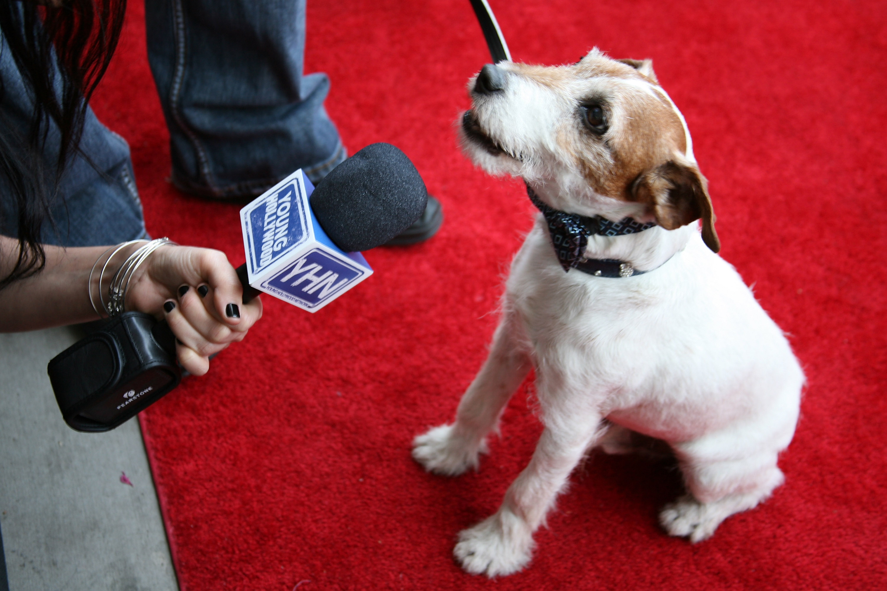 Uggie provides some air time during a red-carpet interview at the Unleashed event. Source: Getty