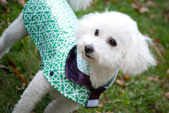 This Palm Beach-inspired coat ($62) decks out your pup in the loveliest shade of green. The cute, preppy collar unfolds into a hood!
