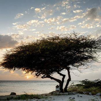 Aruban Sunset Pictures