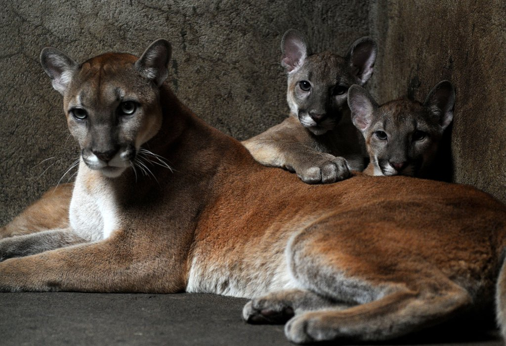 These cubs think mom makes an awfully comfy pillow.