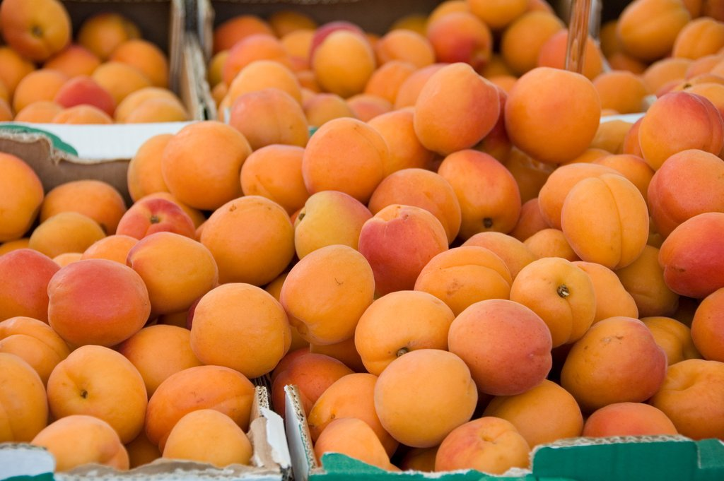The Spring Fruit: Apricots