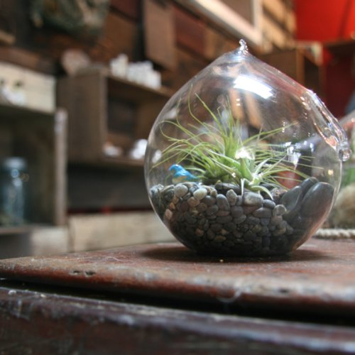 Tips For Creating a DIY Terrarium