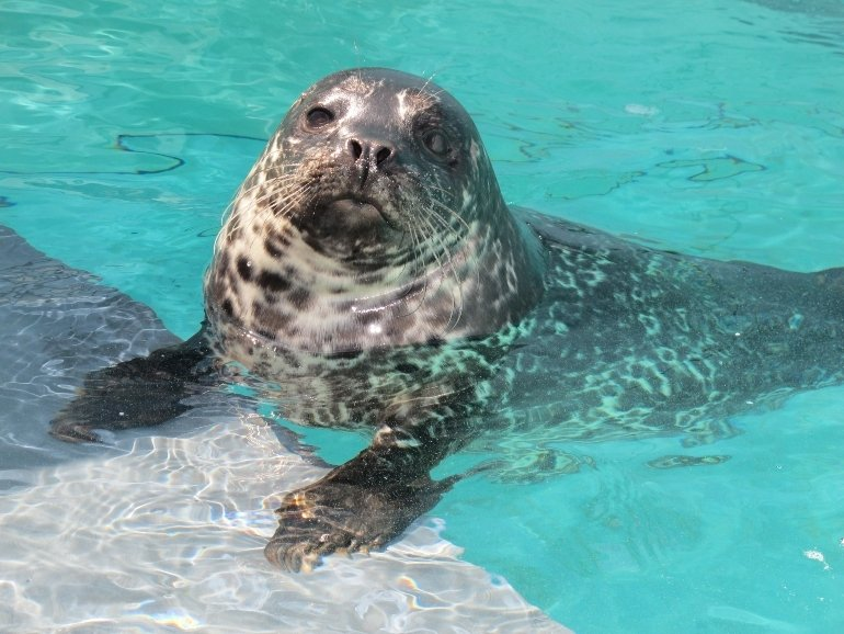 Aquarium of the Pacific: Long Beach, CA
