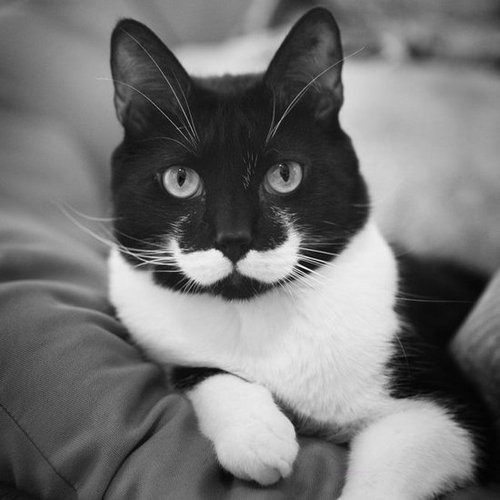 I mustache you a serious question. Source: Flickr user Meagan
