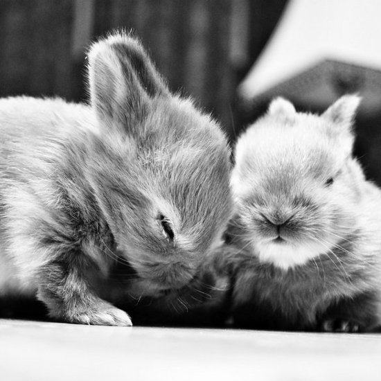 Really Cute Animal Pictures