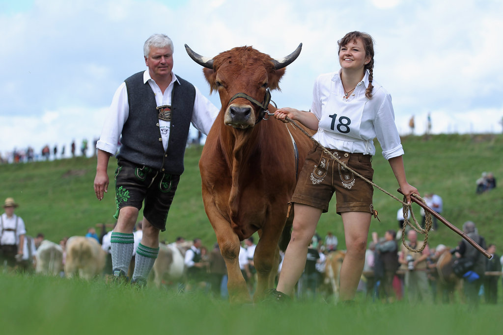 Hang On to Your Lederhosen: That's One Swift Ox!