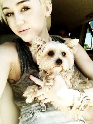 Miley Cyrus posed with a pup. Source: Twitter user MileyCyrus