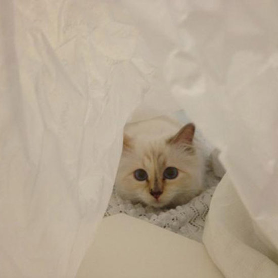 Inside Choupette's Diary