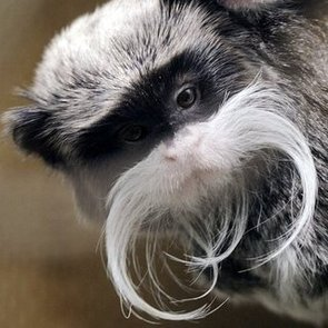 Animals With Mustaches   Pictures
