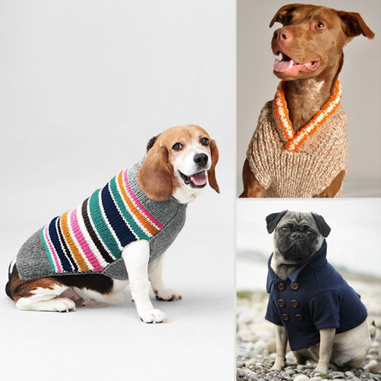 Trendy Winter Wear For Your Posh Pets