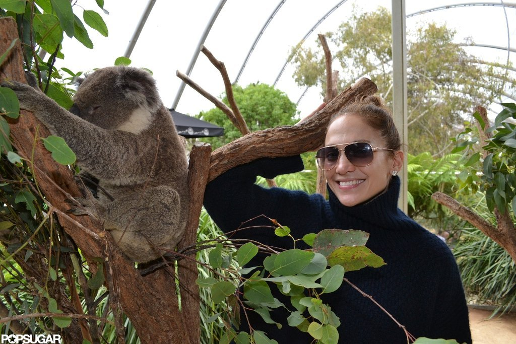Jennifer Lopez posed with a koala bear at the zoo.