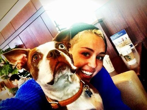 Miley Cyrus cuddled with a friend's dog. Source: Twitter user MileyCyrus