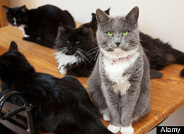 Man Divorces Wife Because She Has Too Many Cats