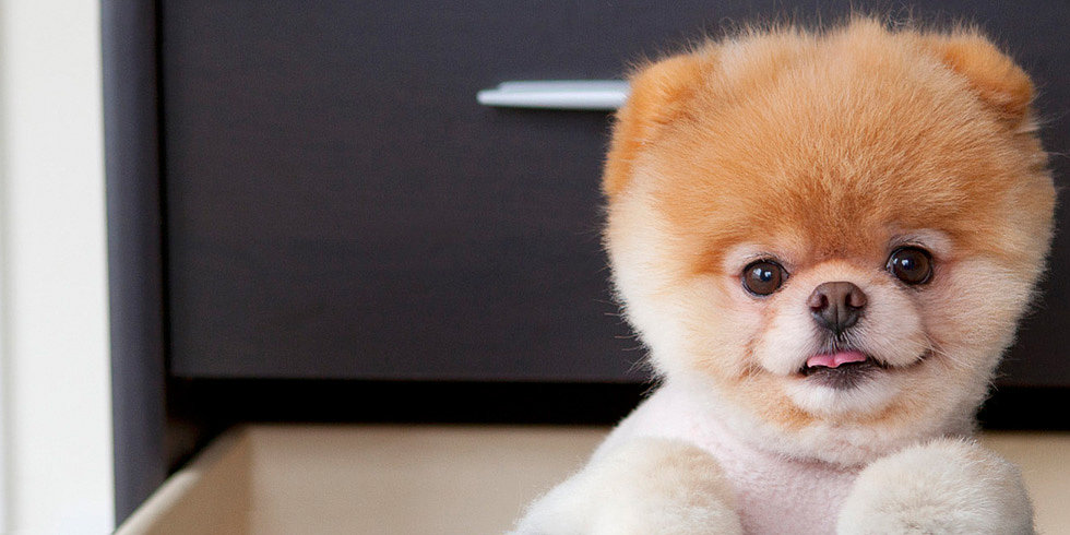 Hey, Boo! A Star Pet Photographer Shares Her Tips
