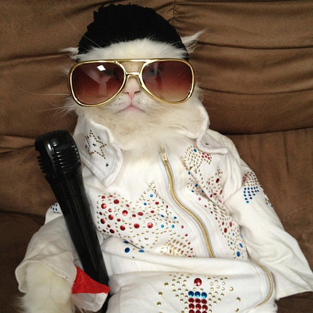 Elvis is ready to rock your world. Source: Instagram user georgethekat