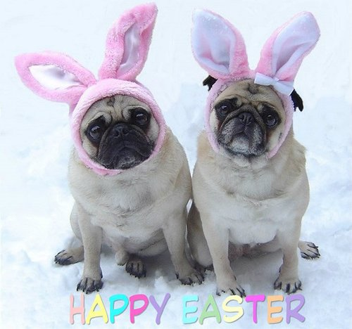 Pugs Happy Easter