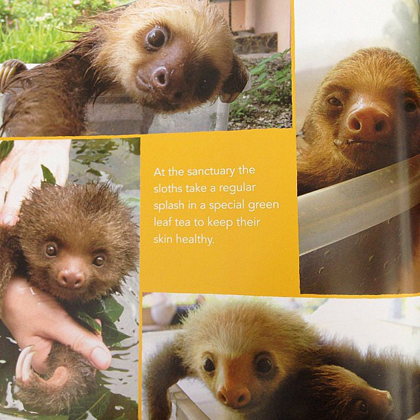 We just had to share this adorable page from A Little Book of Sloth on our Instagram.