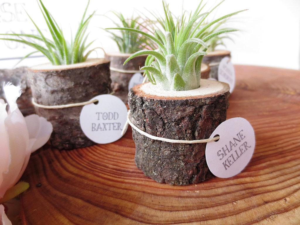 Tree-Stump Planter