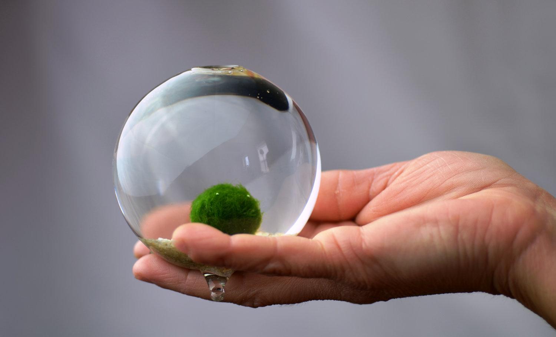 par japanesse boll suger i Helsingborg