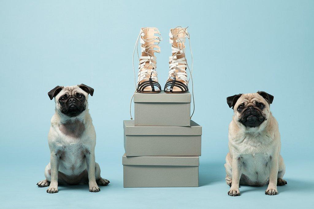 Pugs Gladys, left, and Peggy with Bionda Castana's Cream Leather Kiki Cage Heels ($940). Photo courtesy of Avenue32.
