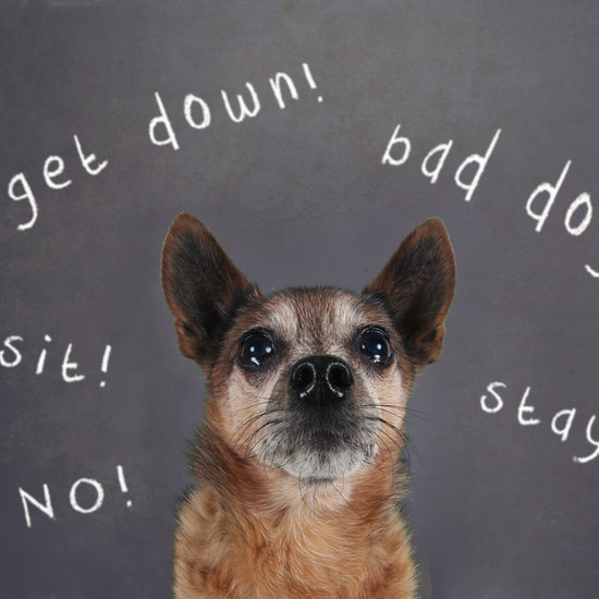 Why Shouldn't You Say No to a Dog?