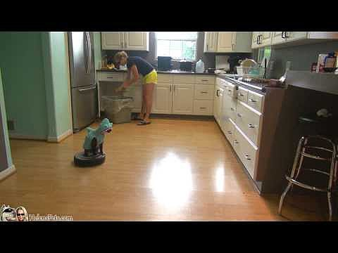 Cat Riding a Roomba   Video