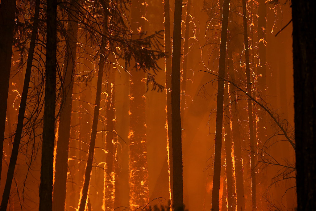 Flames took over the trees near Yosemite National Park.