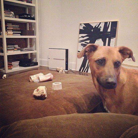Picture I Organizing Dog