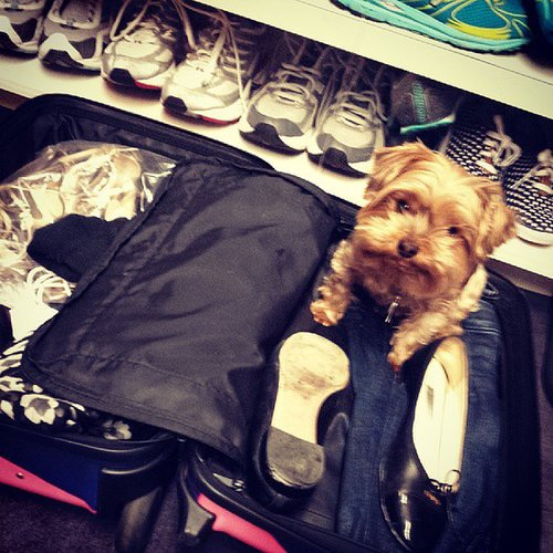 A peek into Emmy Rossum's closet reveals quite the sneaker collection (and a pretty cute dog, too)!